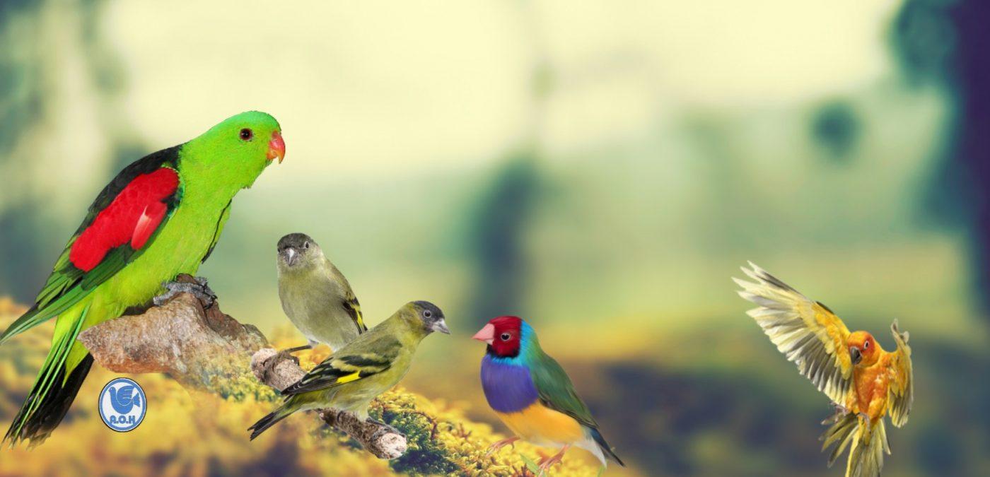 Amis des Oiseaux de Haguenau